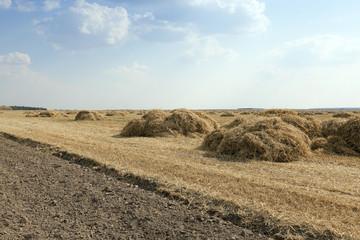 farm field cereals