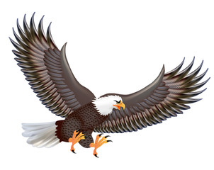 Illustration of the mighty predator eagle in flight isolated on