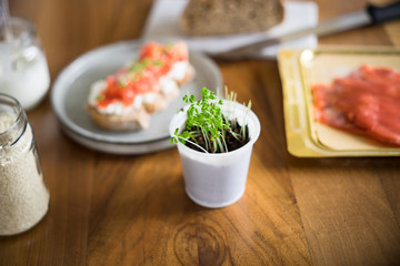 Cress salad grown at home in small plastic cup. Selective focus.