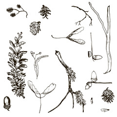 vector set of twigs, pine cones, seeds and acorns