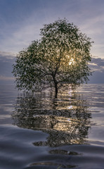 Lamp tree in lake with reflection during sunrise at Pakpra Phatthalung south of Thailand