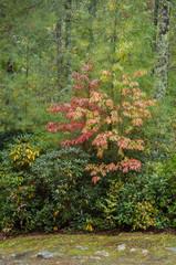 rote Herbstblätter im Wald
