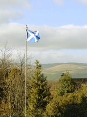 Scottish flag flies in wind
