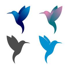 Colorful Colibri Bird Flying Beautiful Illustration