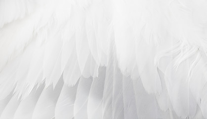 white wing Fototapete