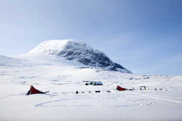 Tents and dogs in winter mountains