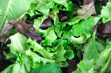 close up on fresh lettuce leaves for salad