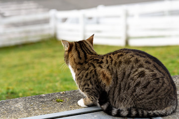 Farm cat keeping watch to greet visitors