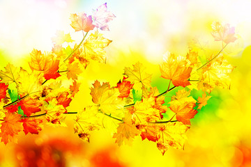 Autumn foliage. Golden Autumn.
