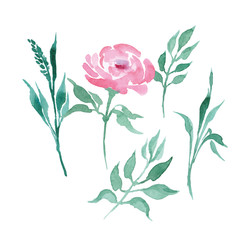 Watercolor flowers and plants set. Hand drawn vector illustration.