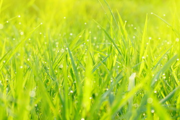 defocused green field grass nature bokeh spring or summer background