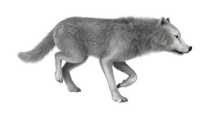3D Rendering Polar Wolf on White