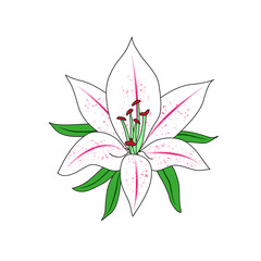 The figure of a Lily flower. Single flower.