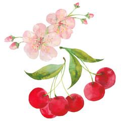 watercolor illustration of cherries