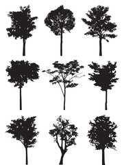 Tree silhouette vector.