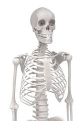 Autocollant pour porte Doux monstres 3d renderings of female skeleton
