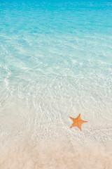 Starfish in water
