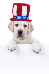 Patriotic pet dog above poster for July 4th or Memorial Day