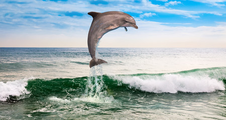 one dolphin in the ocean