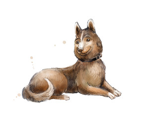 Cute brown mongrel watercolor.