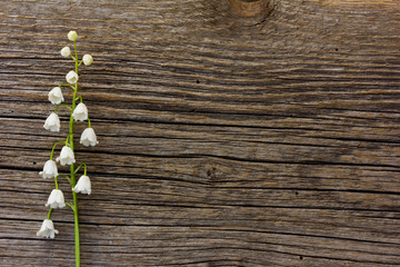 white flower lily of the valley on a background of old gray barn board cracks. with space for posting information