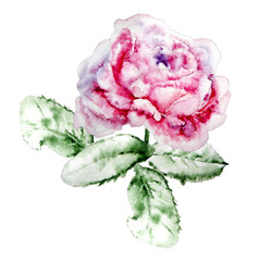 Illustration with rose.  Watercolor.