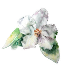 Blossom flower. Watercolor.