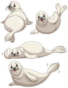 Seal in four poses