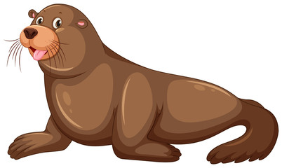 Sea lion with happy face