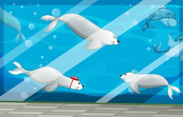 Seals and dolphins swimming in aquarium