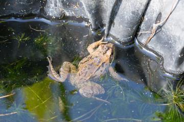 Little frog sitting on a green pumpkin
