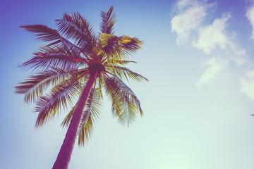 Coconut palm tree on sky