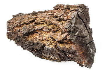 Charred wood with bark isolated on white background