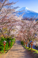 Wall Mural - Path to Mt. Fuji in spring, Fujiyoshida, Japan