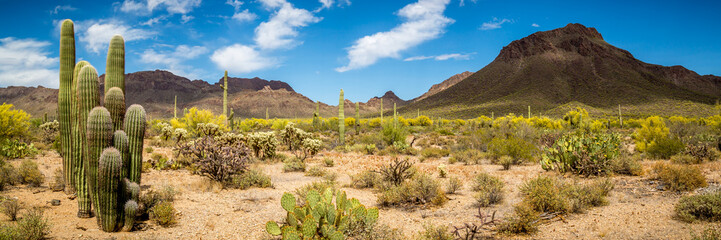Wall Murals Drought Arizona Desert Landscape