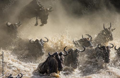 Wall mural Wildebeests are crossing Mara river. Great Migration. Kenya. Tanzania. Masai Mara National Park. An excellent illustration.