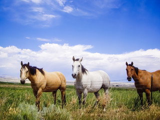 Horses of a different color