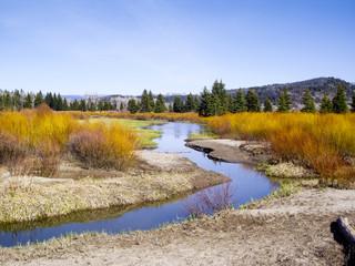 Riverbanks in Summer color