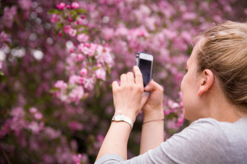 Portrait of a young smiling woman taking picture  of an apple trees' flowers by her smartphone. Girl and blooming apple tree. Spring time with trees flowers. photo on phone. Outdoors.