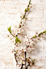 Spring blossom in glass on gray old rustic wooden background