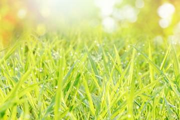 defocused green grass nature bokeh spring or summer background