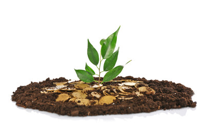 Pile of coins in soil with young plant isolated on white