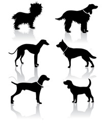 Vet Dog Icons Symbols Set EPS vector