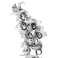 Poster Bloemen Orchid flowers