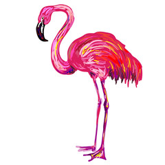 Pink American or Caribbean flamingo exotic bird vector Illustration