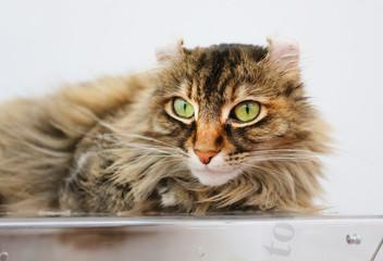 Photo portrait of a cat