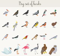 Birds illustration icons. Colorful cartoon birds icons set.