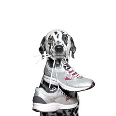 Dog playing sports -- running and jogging