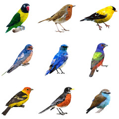 Different Type of Birds
