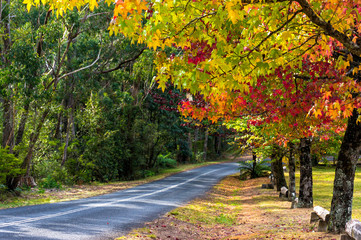 Autumn landscape road with colorful trees